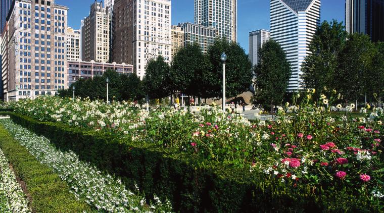 Large garden in inner city park. botanical garden, city, cityscape, condominium, daytime, downtown, flora, flower, garden, grass, leaf, meadow, metropolis, metropolitan area, neighbourhood, park, plant, residential area, sky, skyline, skyscraper, suburb, tower block, tree, urban area