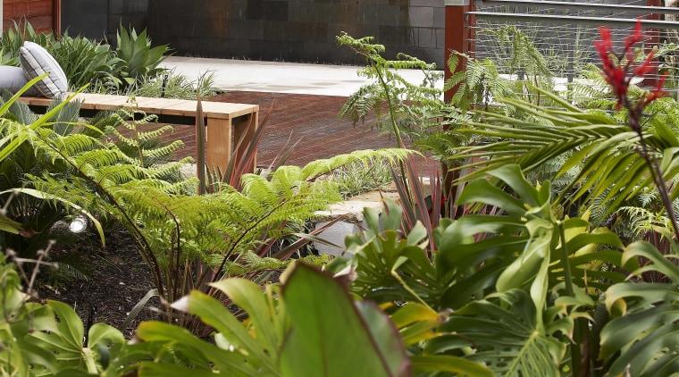 Contemporary outdoor area - Contemporary outdoor area - backyard, flora, flower, garden, leaf, plant, vegetation, yard, brown