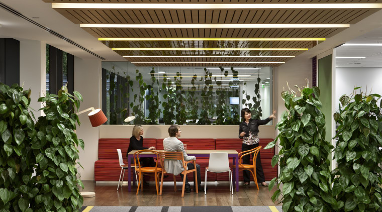 The Southern Cross Health Society premises in Auckland interior design, brown