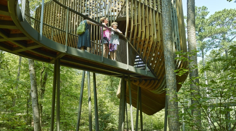 Looking to connect with nature. - Reconnecting with architecture, botany, canopy walkway, forest, jungle, plant, tree, tree house, brown, green