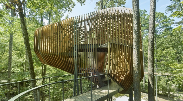 The underlying theme of dendrology, the study of architecture, environmental art, pavilion, tree, brown, green
