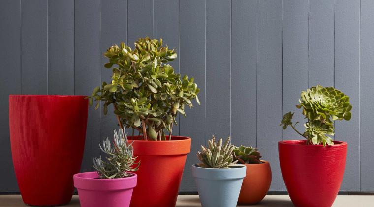 Claudia Kozubblueexteriorresene Safehaventrafficlazy Riverdaredevilpoppyparty Zonepink Ribbonphoto Wendy Fenwickd1 ceramic, flowerpot, houseplant, plant, vase, gray
