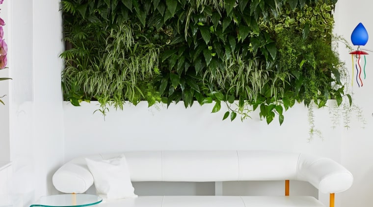 The green wall captures some of the nature flowerpot, interior design, plant, wall, white