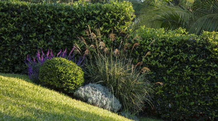 Garden Project By Landart Landscapes Photo By Jason botanical garden, garden, grass, grass family, groundcover, hedge, landscape, landscaping, lawn, plant, shrub, vegetation, walkway, yard, brown, green