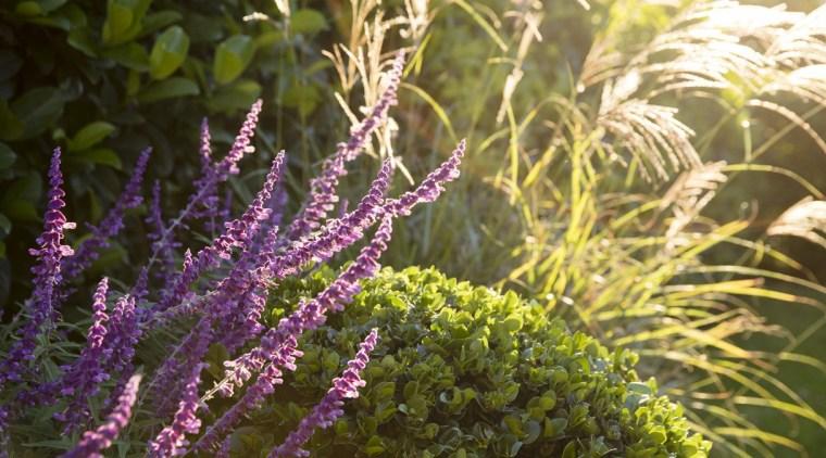 Garden Project By Landart Landscapes Photo By Jason flora, flower, plant, purple, shrub, vegetation, brown