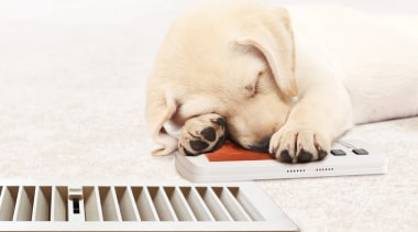 Bonaire Gas Ducted Central Heating 3 carnivoran, companion dog, dog, dog breed, dog breed group, dog like mammal, labrador retriever, paw, puppy, puppy love, retriever, snout, white