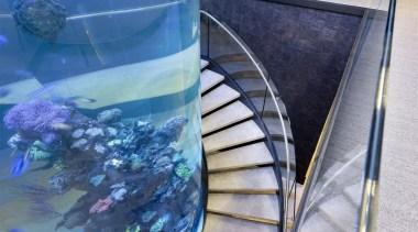 Zorzi Homes 5 marine biology, reef, water, blue, gray
