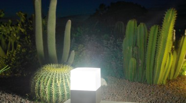 Exterior and Outdoor Lights cactus, flowerpot, lighting, majorelle blue, plant, black