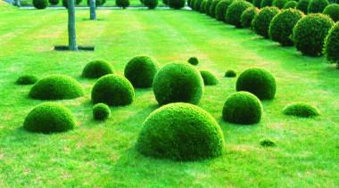 Commercial landscape biome, garden, grass, grass family, landscape, lawn, plant, shrub, tree, vegetation, green