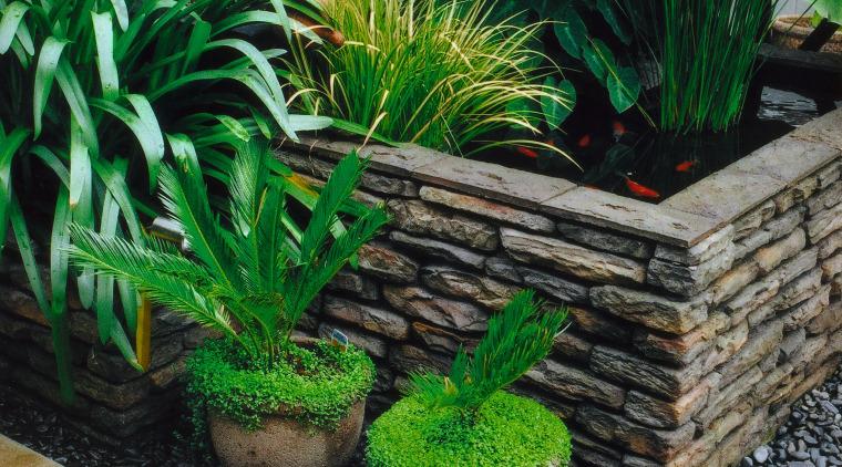A view of this landascaped garden featuring moss arecales, flowerpot, garden, grass, houseplant, landscaping, plant, green, black