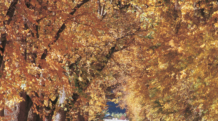 Here is a view of Millbrook Country Club autumn, branch, deciduous, grove, leaf, maidenhair tree, plant, spring, tree, brown, orange