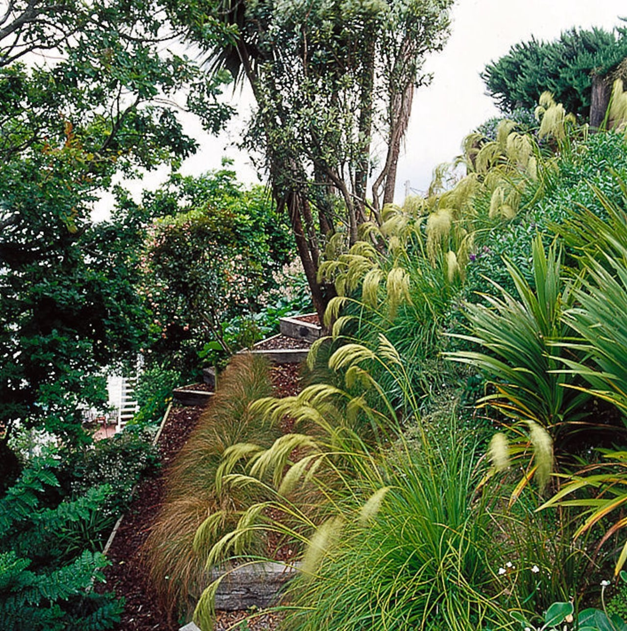 Native plants on slope of hill. arecales, biome, botanical garden, ecosystem, elaeis, flora, forest, garden, grass, grass family, jungle, landscape, nature reserve, old growth forest, palm tree, plant, plant community, rainforest, shrub, shrubland, tree, tropics, vegetation, green