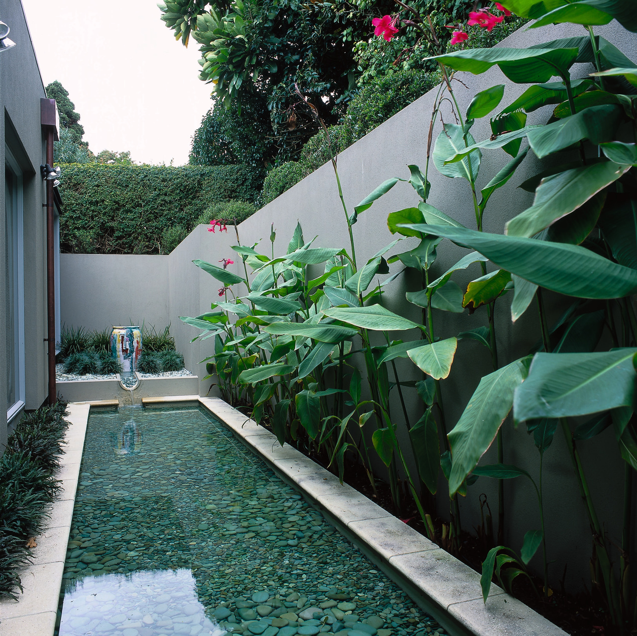 outdoor lap pool, garden backyard, courtyard, garden, grass, house, leaf, plant, swimming pool, tree, yard, green