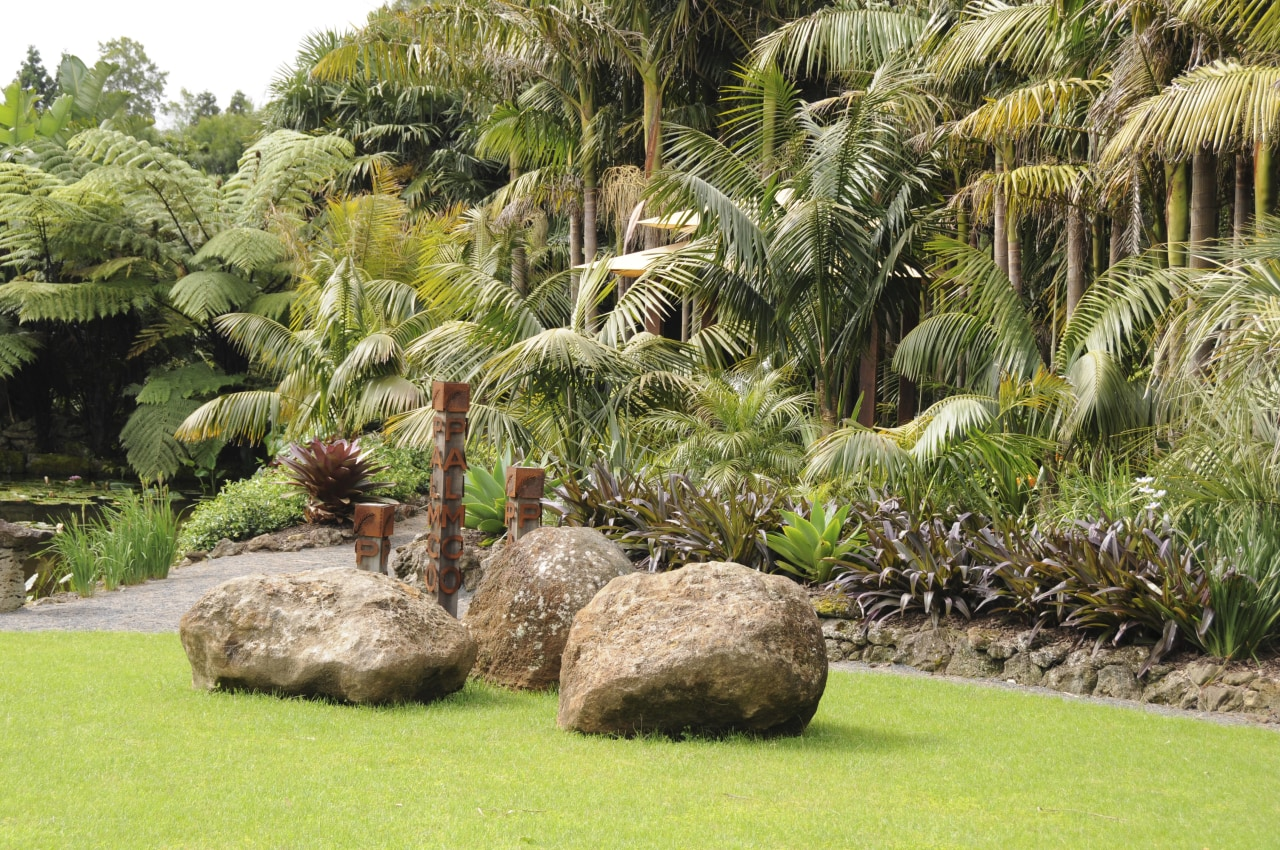 View of a designed and landscaped garden which arecales, botanical garden, flora, garden, grass, grass family, landscape, landscaping, palm tree, plant, tree, vegetation, brown, yellow