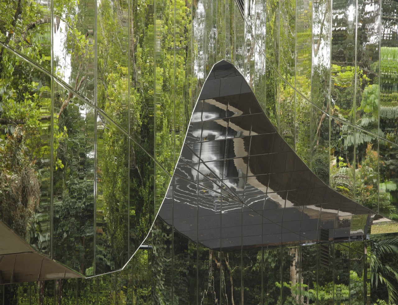 outdoor view of Cairns Botanic Gardens Visitor Centre forest, nature reserve, tree, woodland, brown, black