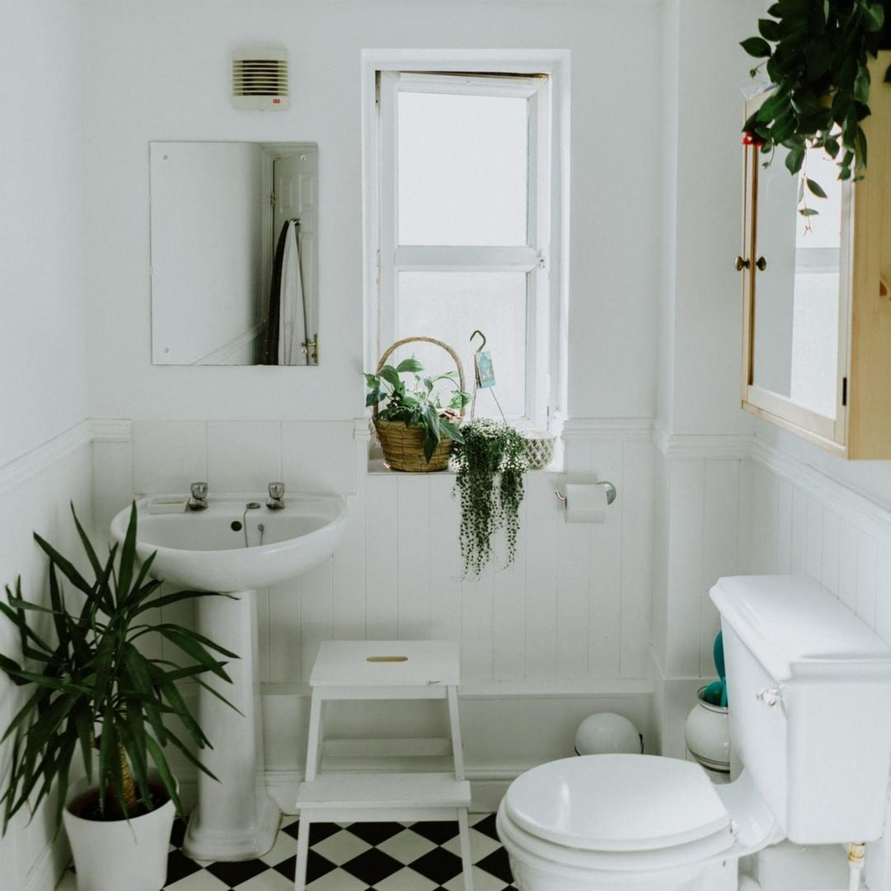 Indoor plants in the bathroom instantly lift the