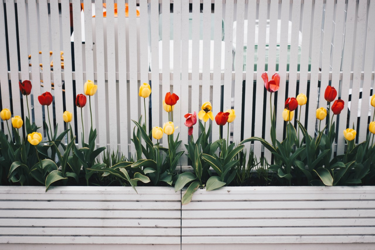 Fences can now be turned into garden focal botany, fence, floral design, floristry, flower, flowering plant, grass, houseplant, landscape, leaf, lily family, petal, picket fence, plant, plant stem, spring, tulip, wildflower, yellow, white, gray