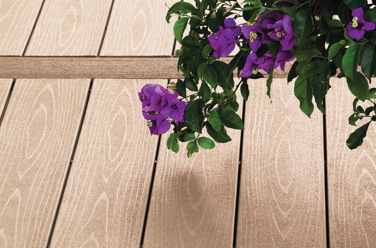 Sandy Birch is the new colour of the flora, floristry, flower, flowering plant, flowerpot, leaf, petal, plant, purple, spring, violet, orange