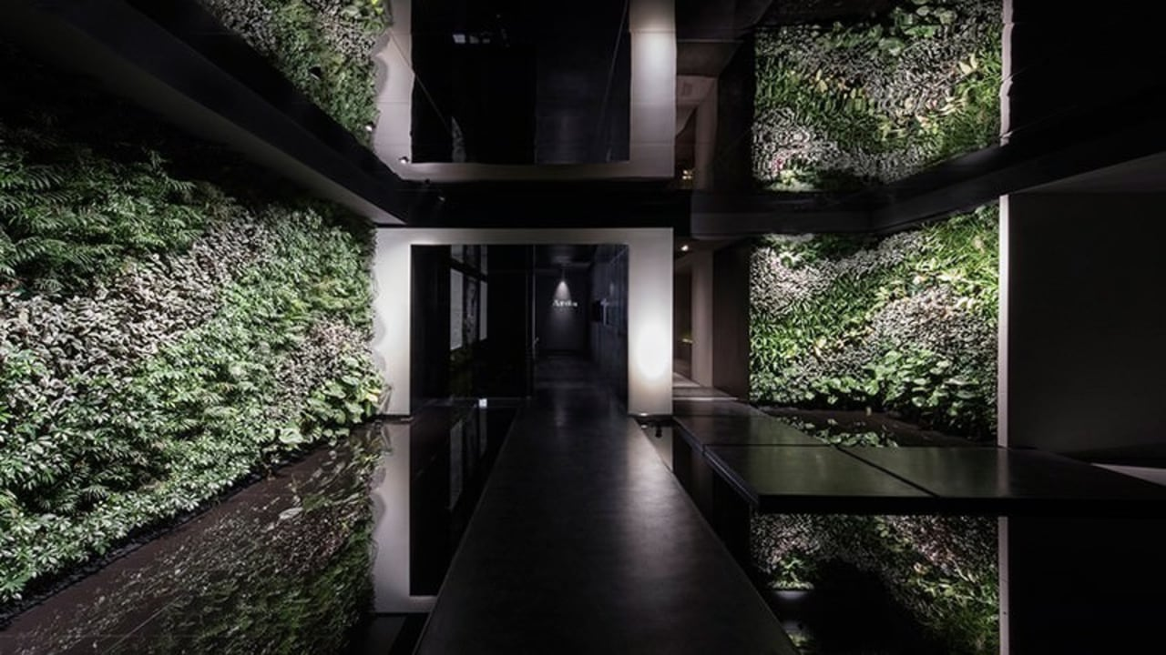 The entrance with plants and stepping stones architecture, home, house, interior design, plant, property, tree, black