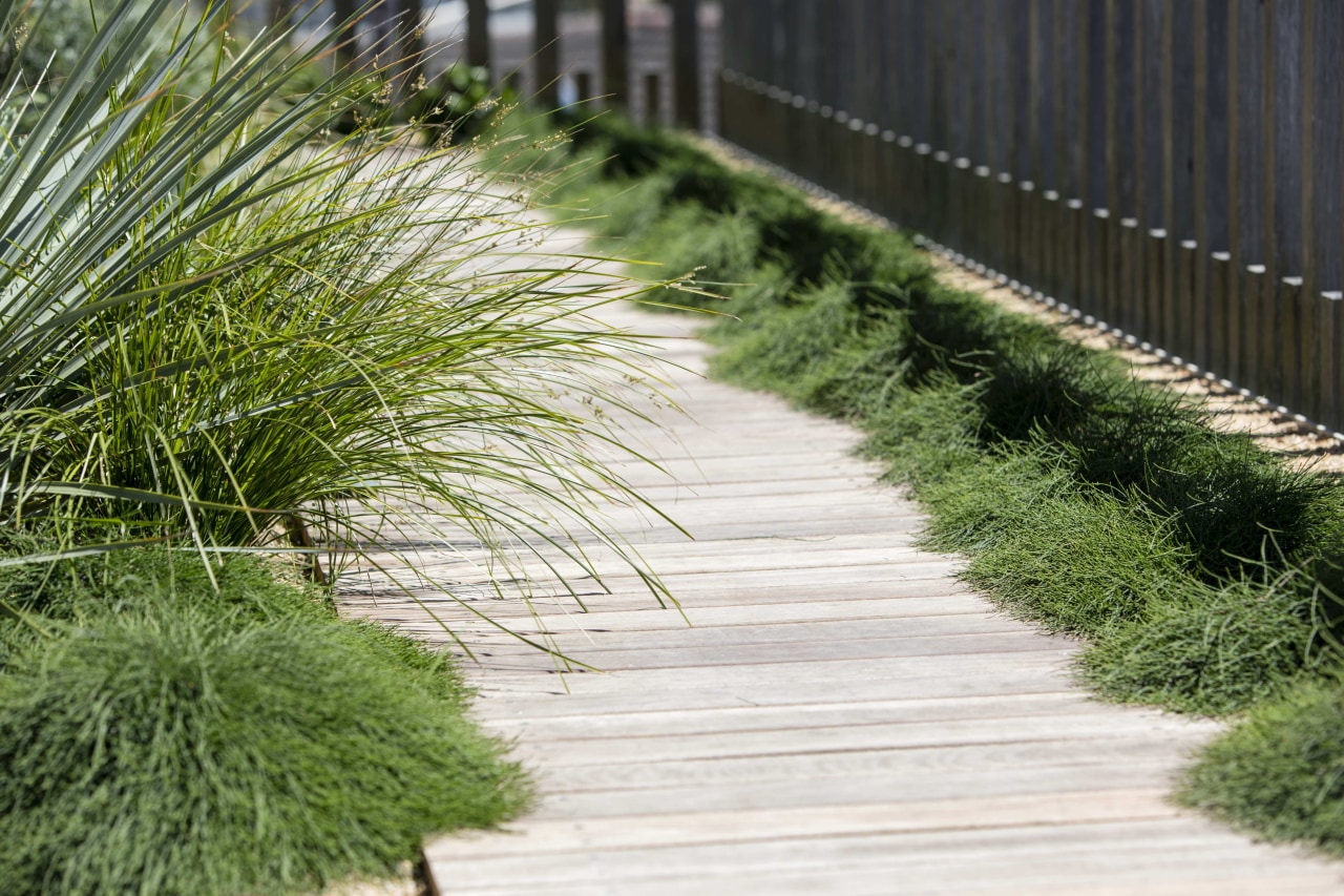In terms of maintenance, there are similarities with boardwalk, chrysopogon zizanioides, garden, grass, grass family, groundcover, landscape, landscaping, lawn, path, plant, sidewalk, tree, walkway, green, white