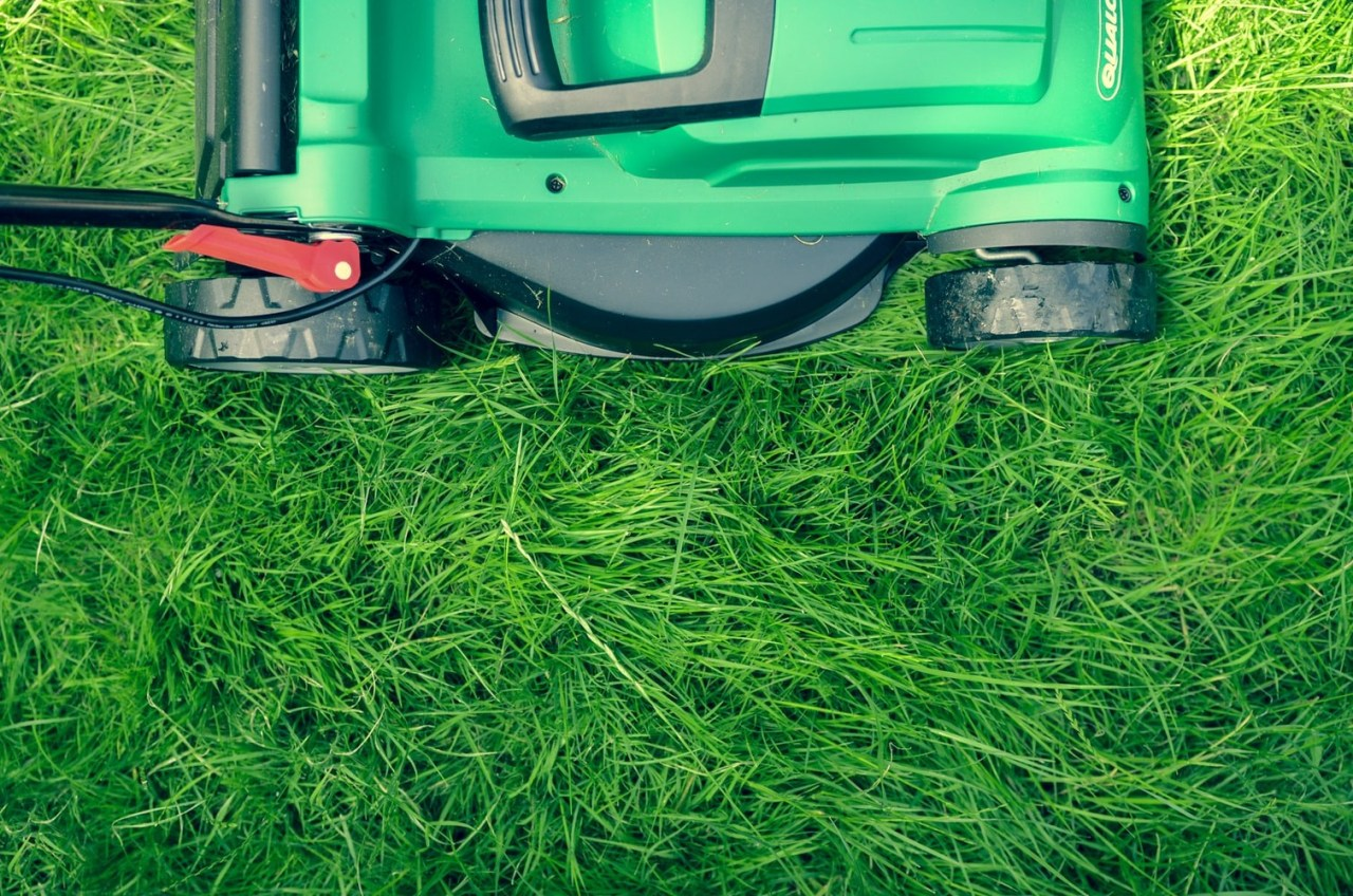 Bug? Weeds? Dead spots? There are ways to green