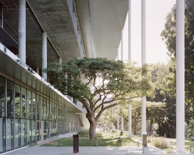 A shady overhanging roof and giant platforms that architecture, building, plants, trees, urban design, School of Design and environment