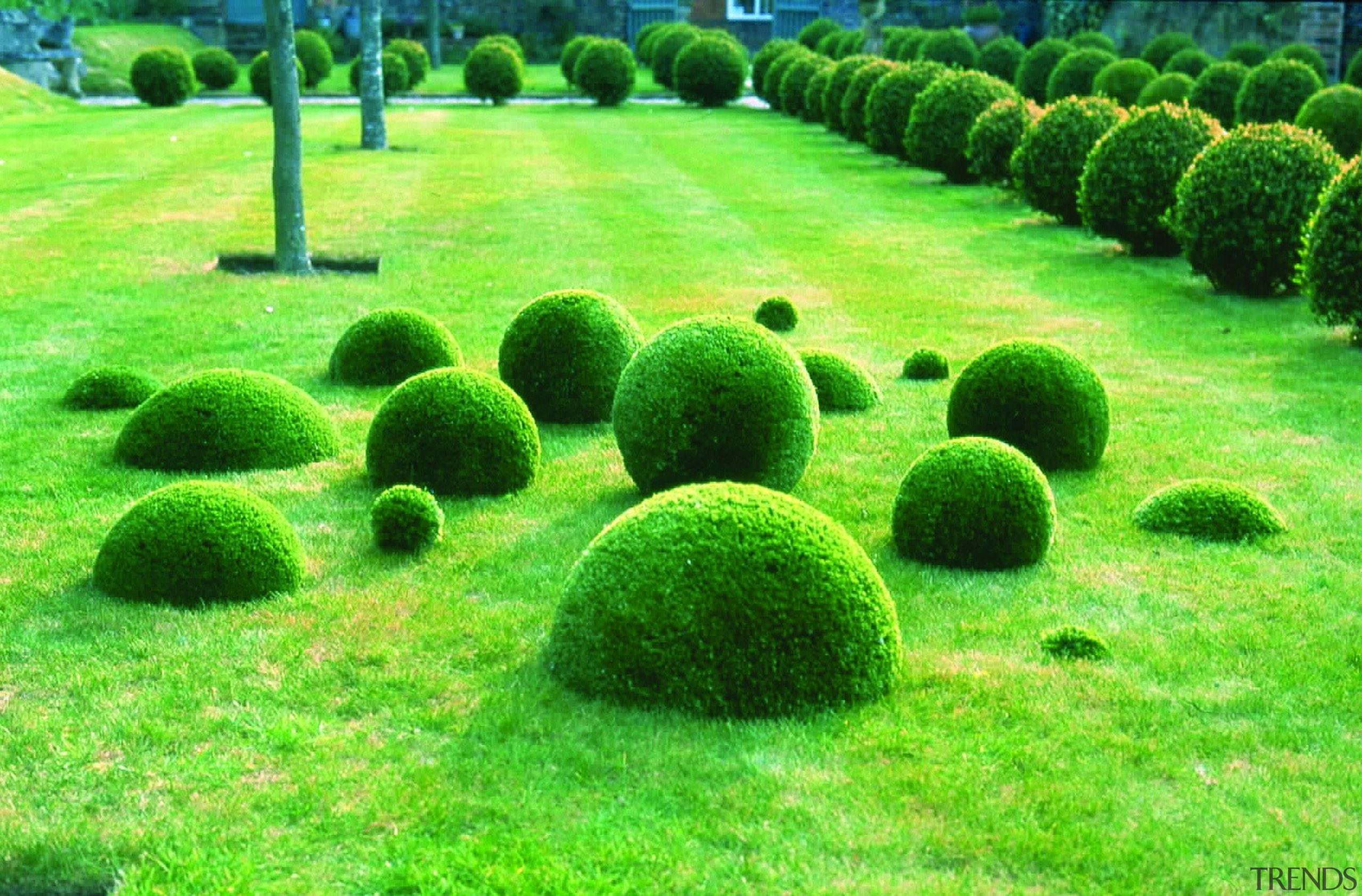 Commercial landscape - biome | garden | grass biome, garden, grass, grass family, landscape, lawn, plant, shrub, tree, vegetation, green