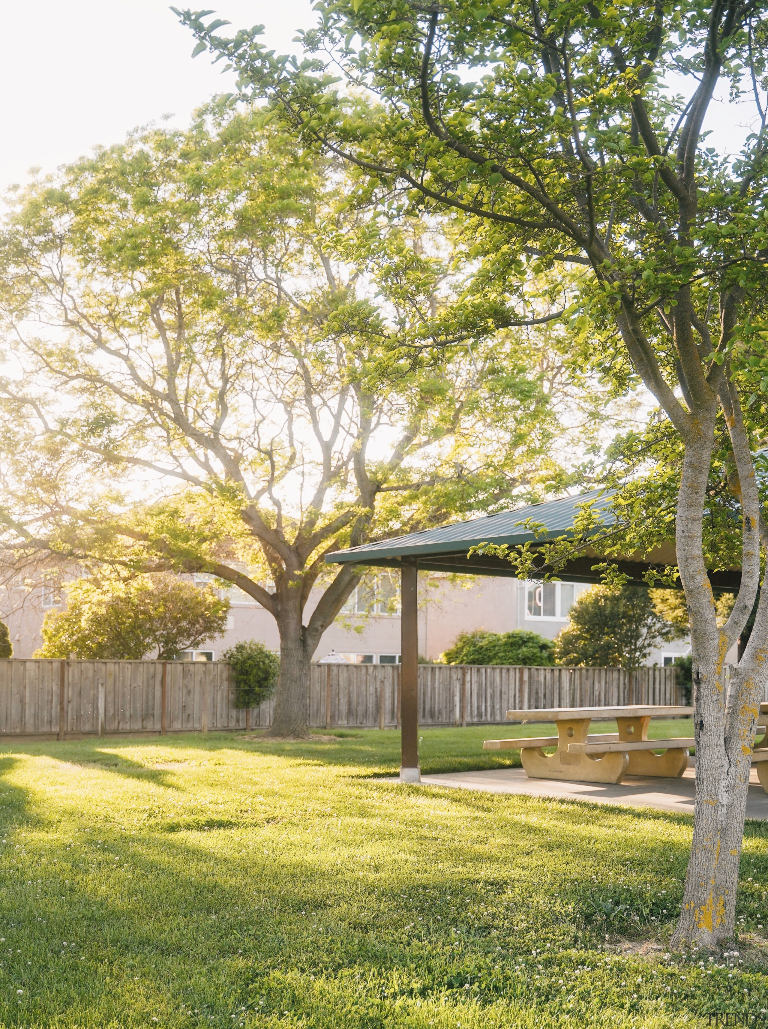 Backgarden with tree -