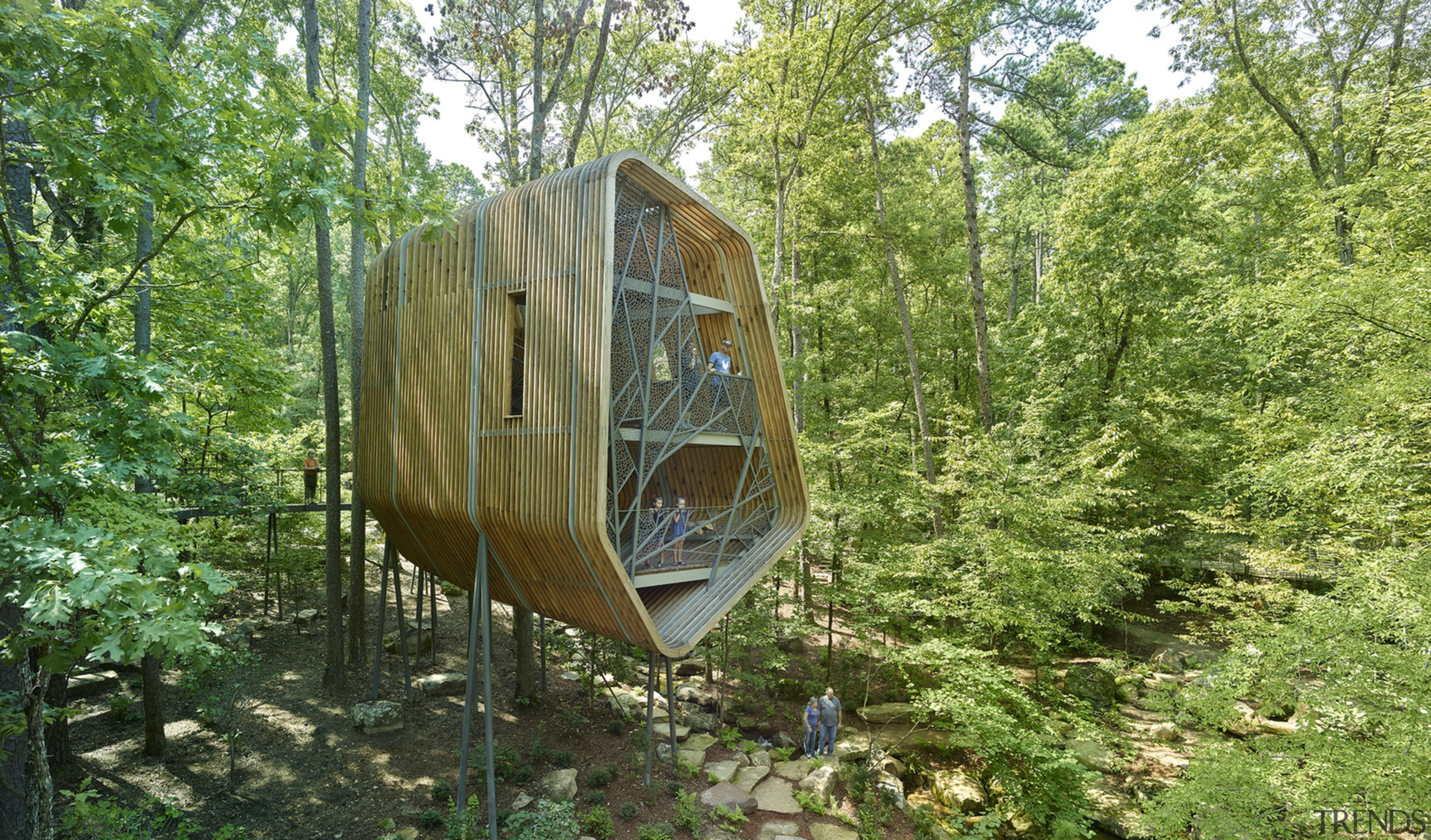 This tree house is the first of three forest, jungle, nature reserve, plant community, tree, woodland, green, brown
