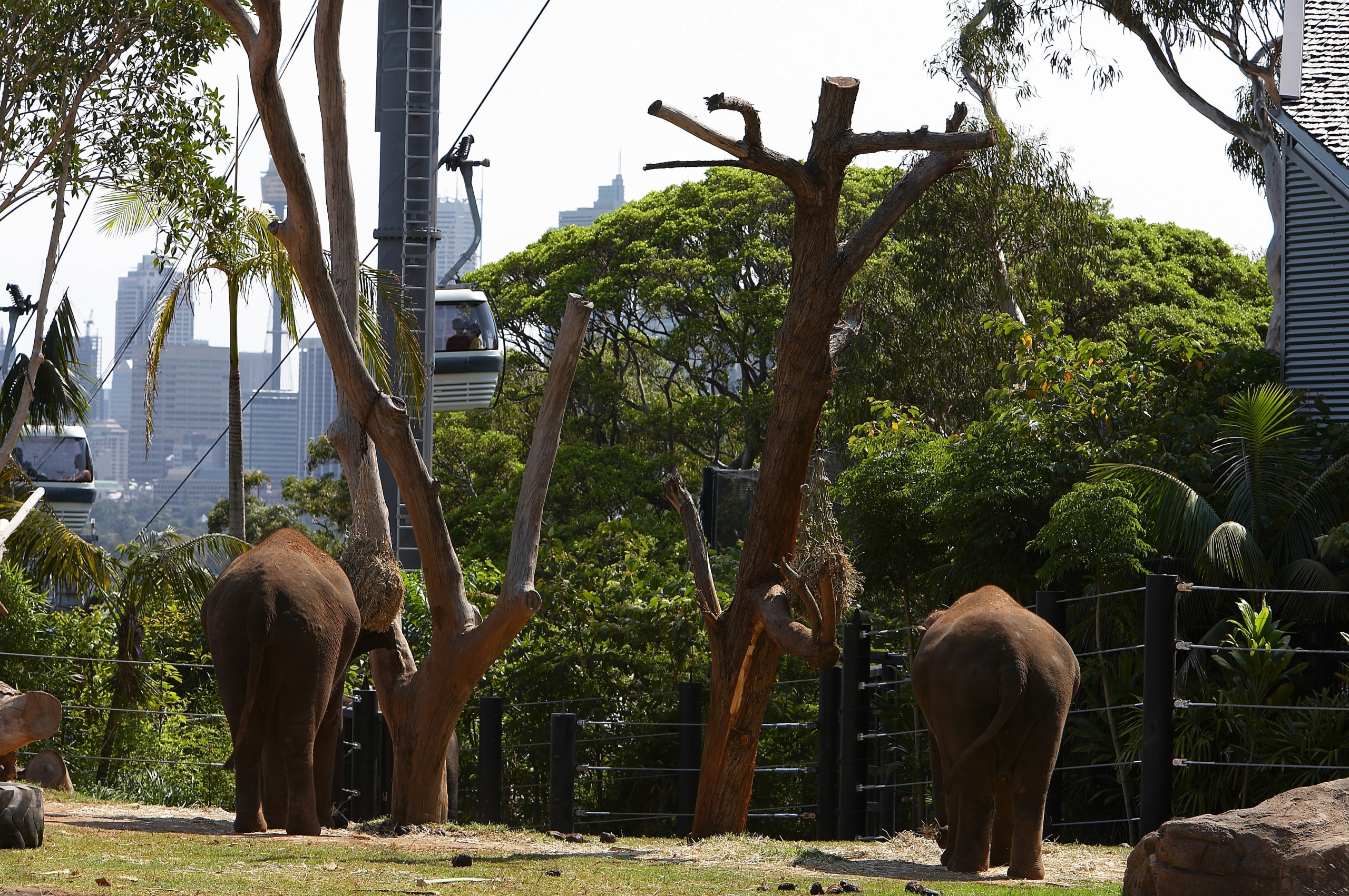 A view of the Asian elephant enclosure featuriing elephants and mammoths, mammal, plant, recreation, sculpture, tree, zoo, brown, black