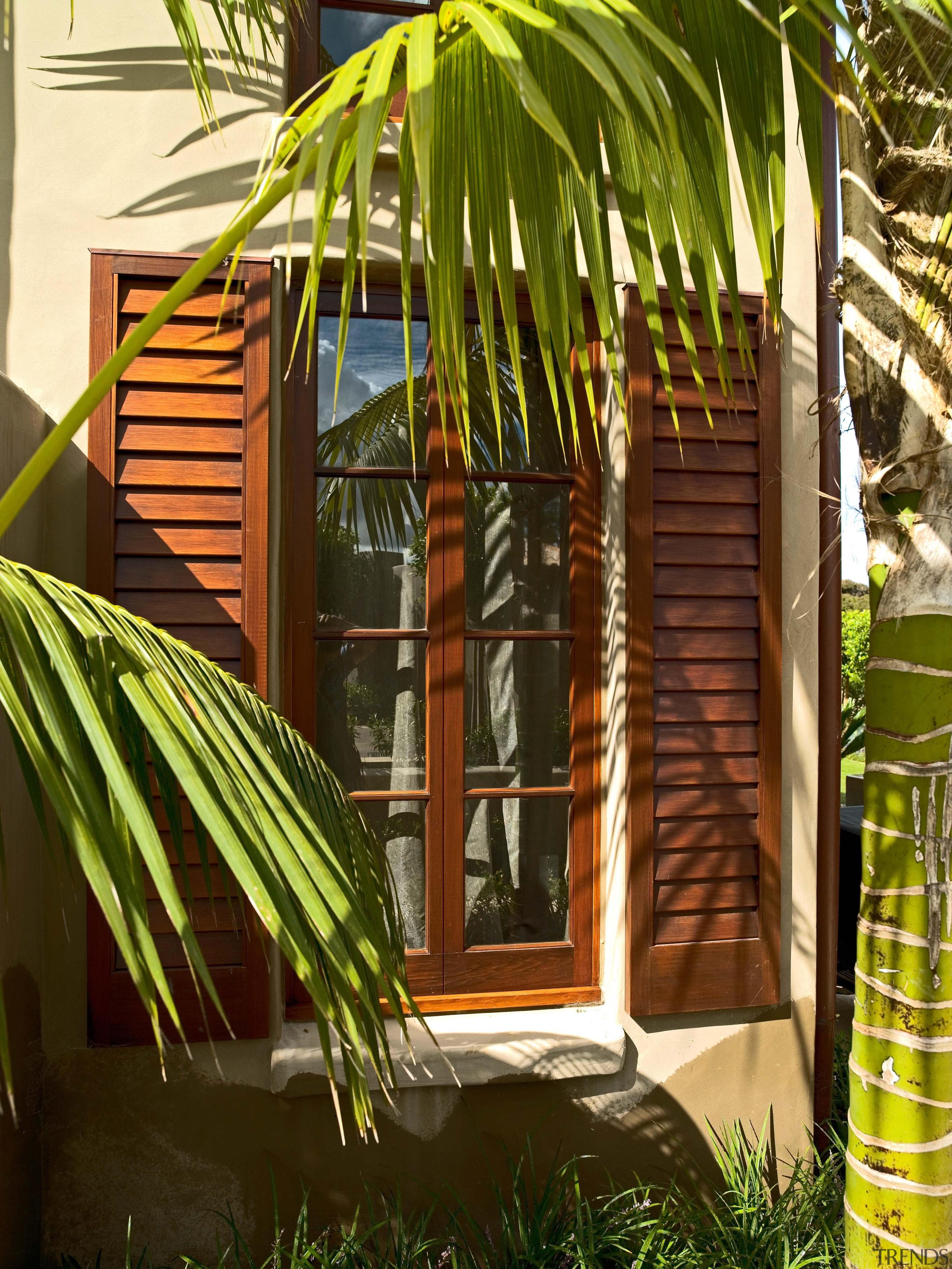 139 Onetaunga 27 - Onetaunga 27 - arecales arecales, house, palm tree, plant, tree, window, brown
