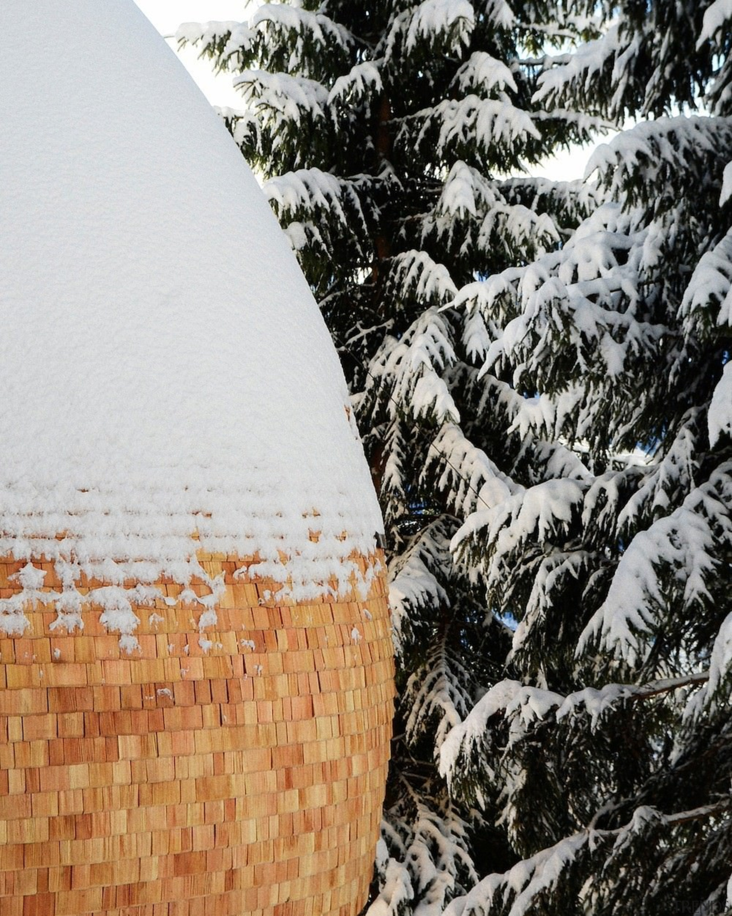 A snow-capped wood egg - A snow-capped wood branch, freezing, frost, snow, tree, winter, wood, white, black