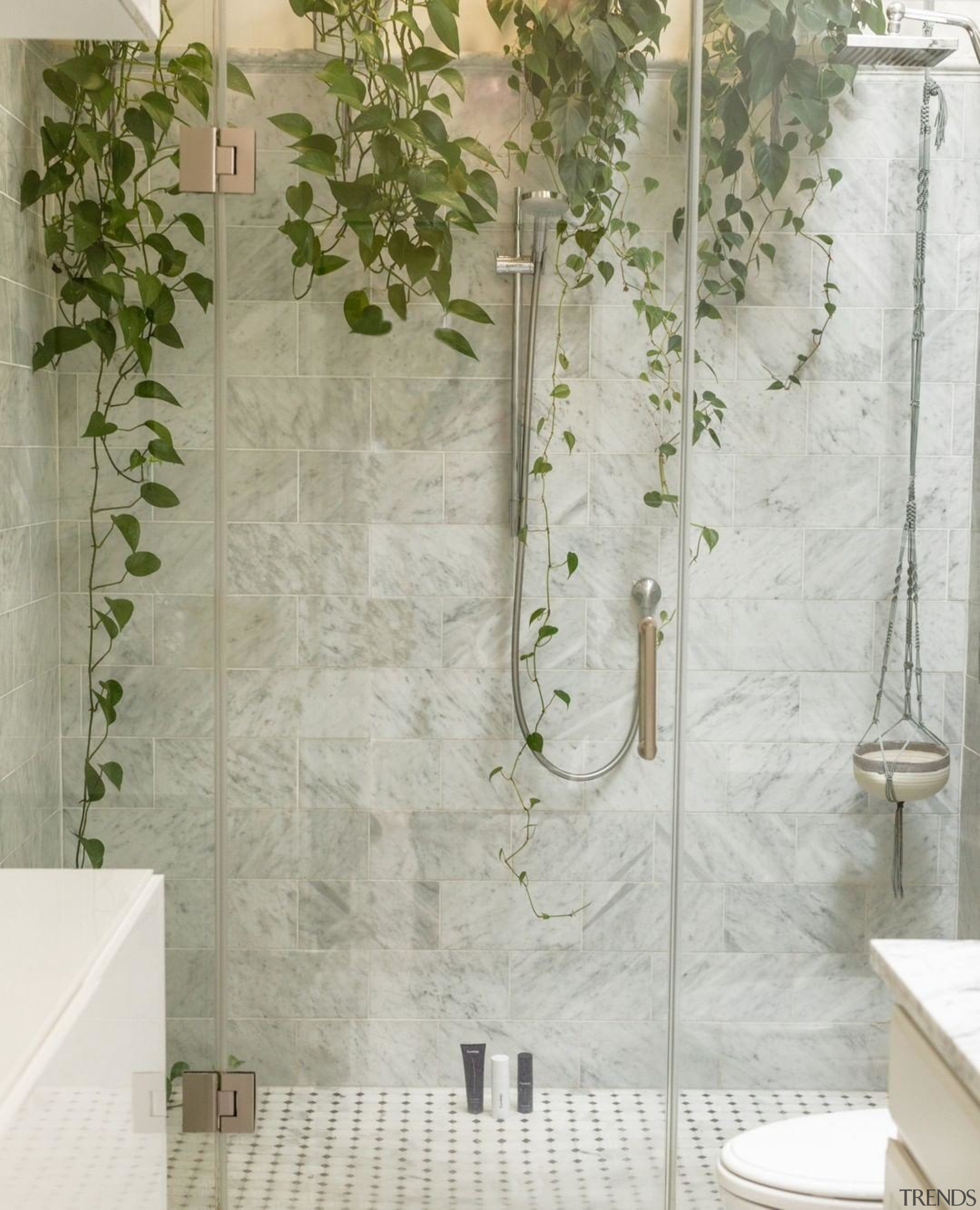 A moisture-loving trailing plant, ivy makes for an