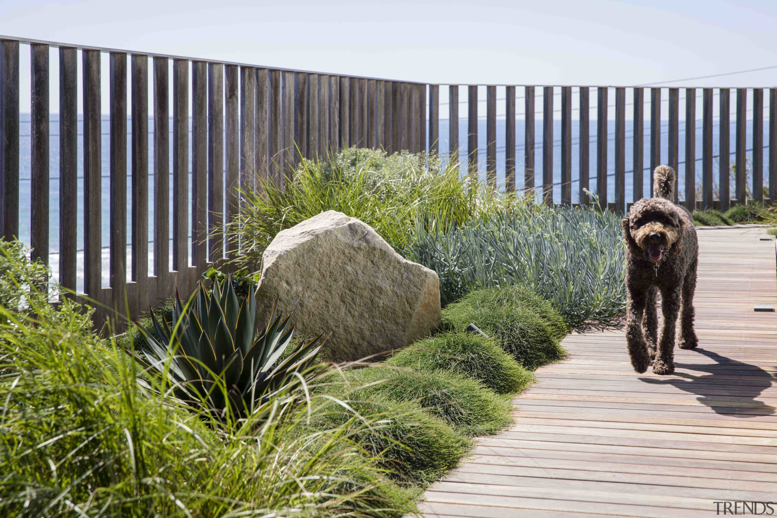 5 top tips for a green rooftop oasis canidae, fawn, fence, grass, landscape, plant, sporting group, walkway, wildlife, white