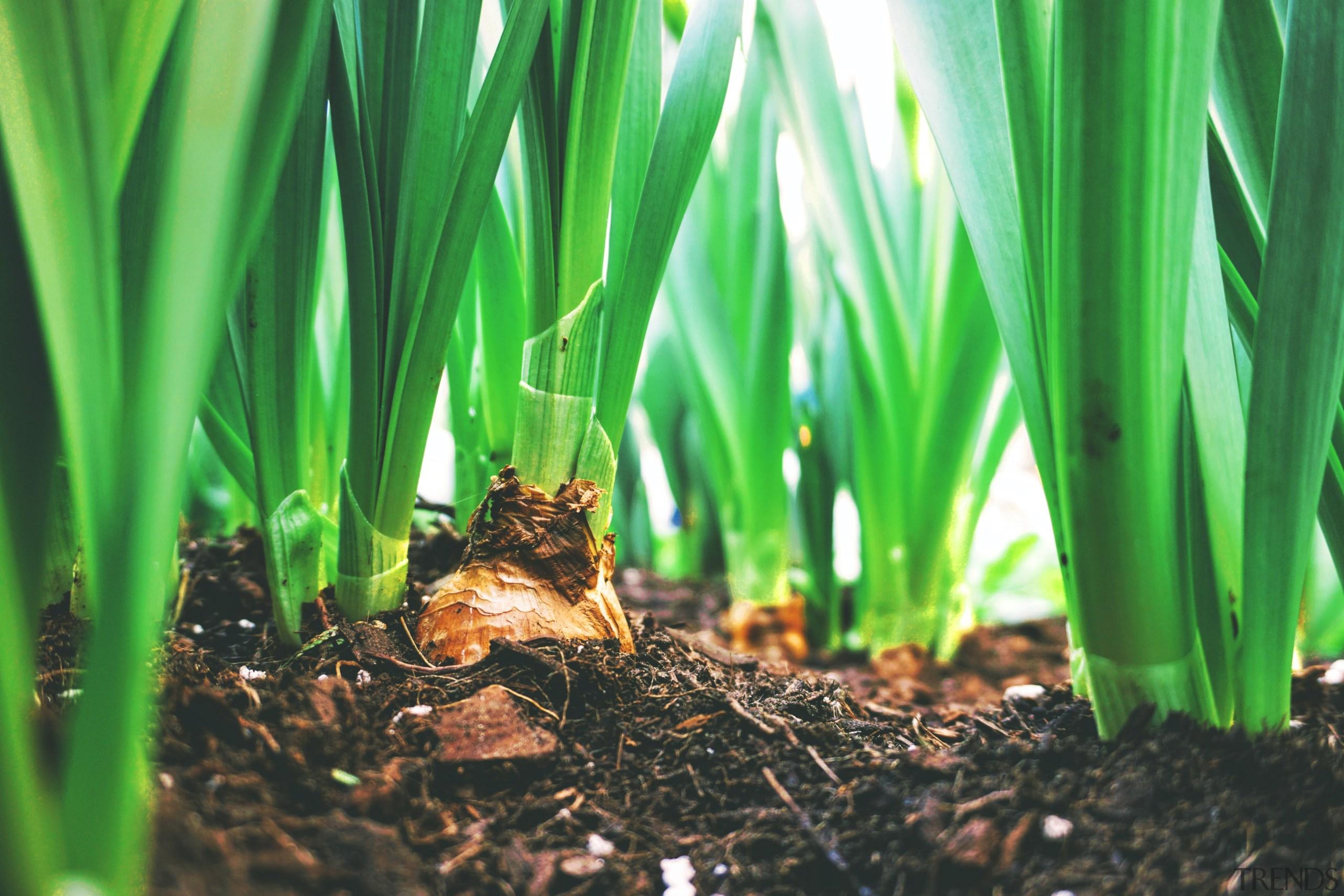 Plant now, enjoy a bit later – seven