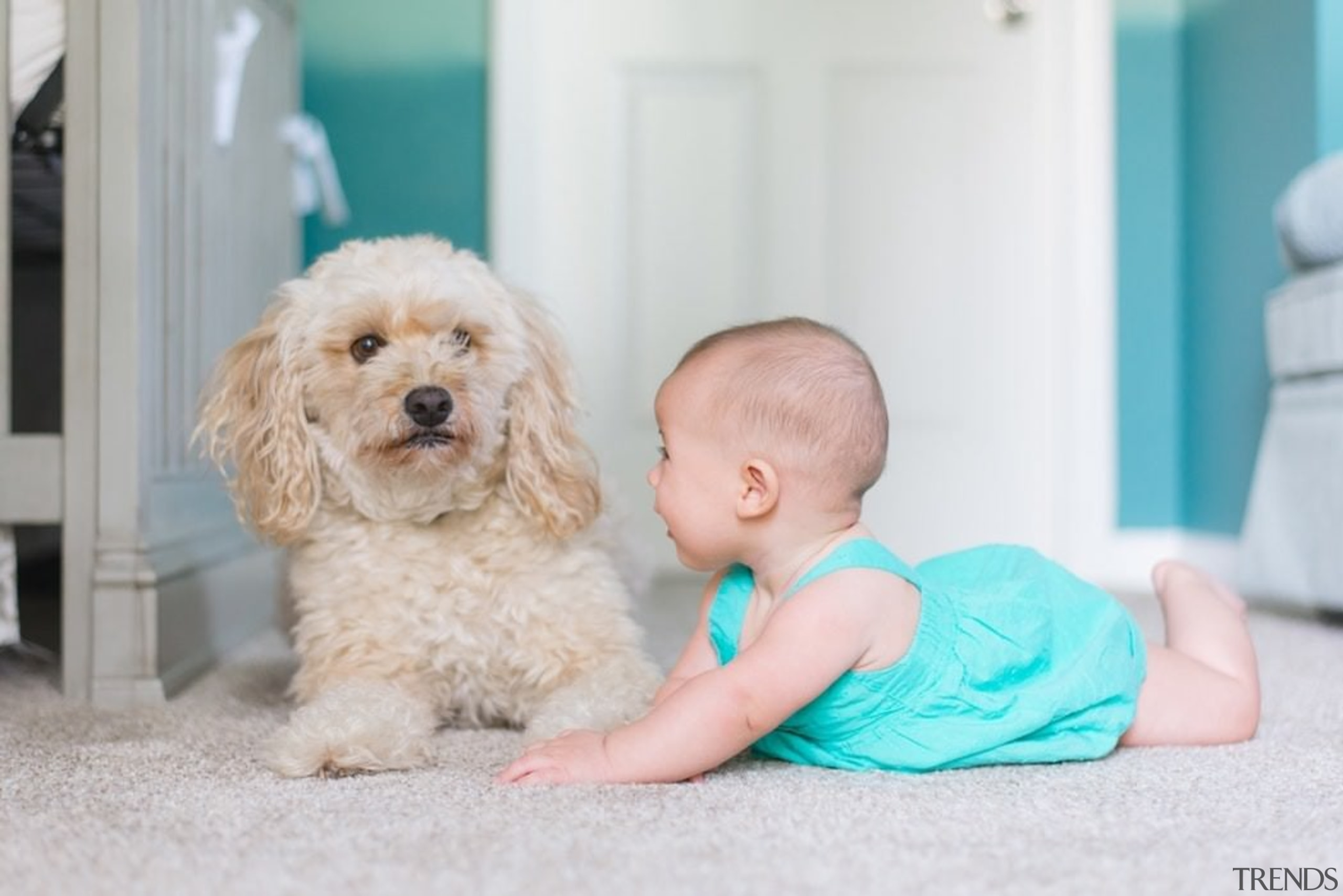 It's time to baby-proof your house. - It's child, cockapoo, companion dog, dog, dog breed, dog clothes, dog crossbreeds, dog like mammal, puppy, snout, toddler, gray, white