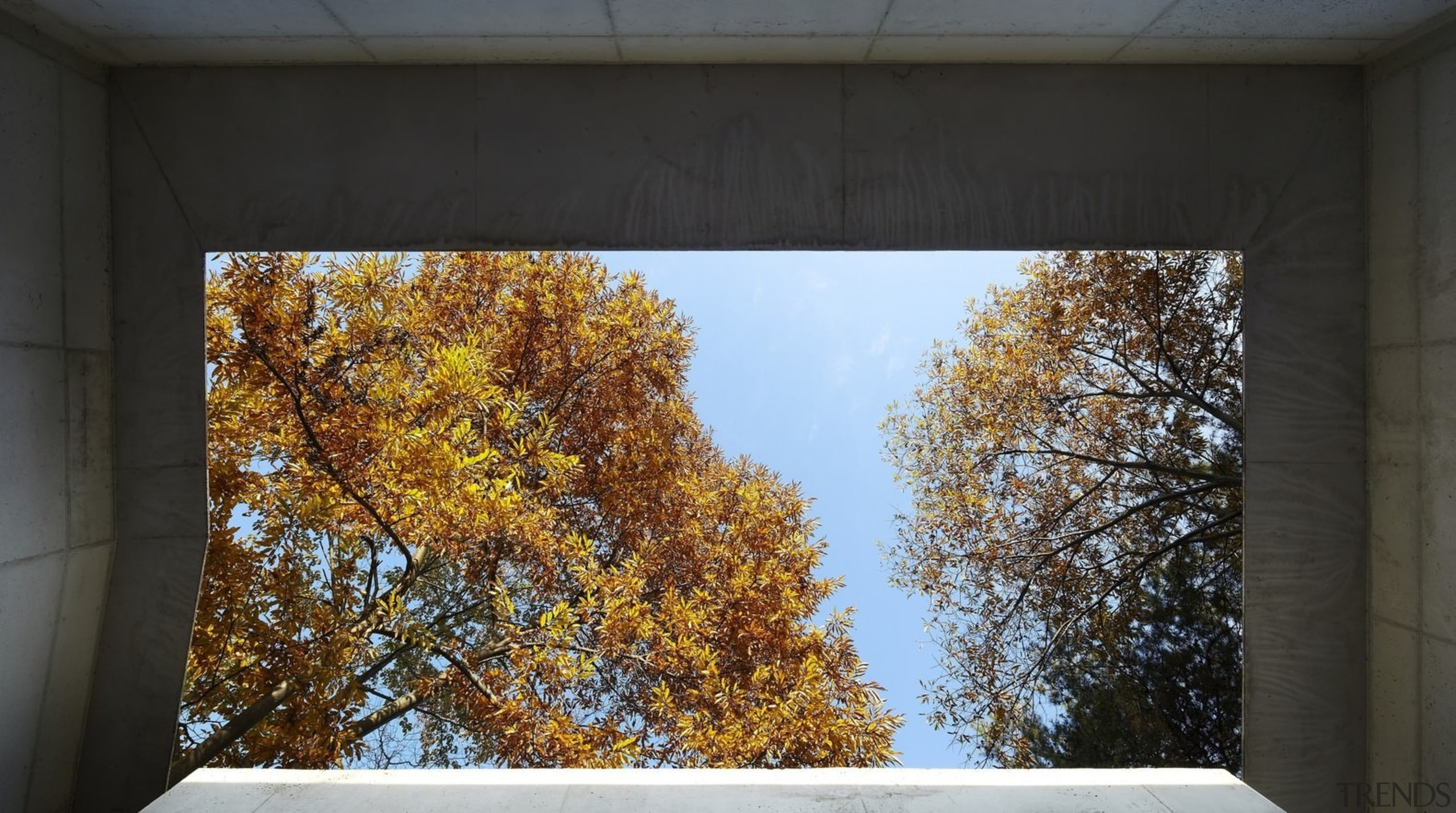 Looking up and out to the forest - architecture, autumn, house, leaf, sky, tree, wall, window, yellow, black