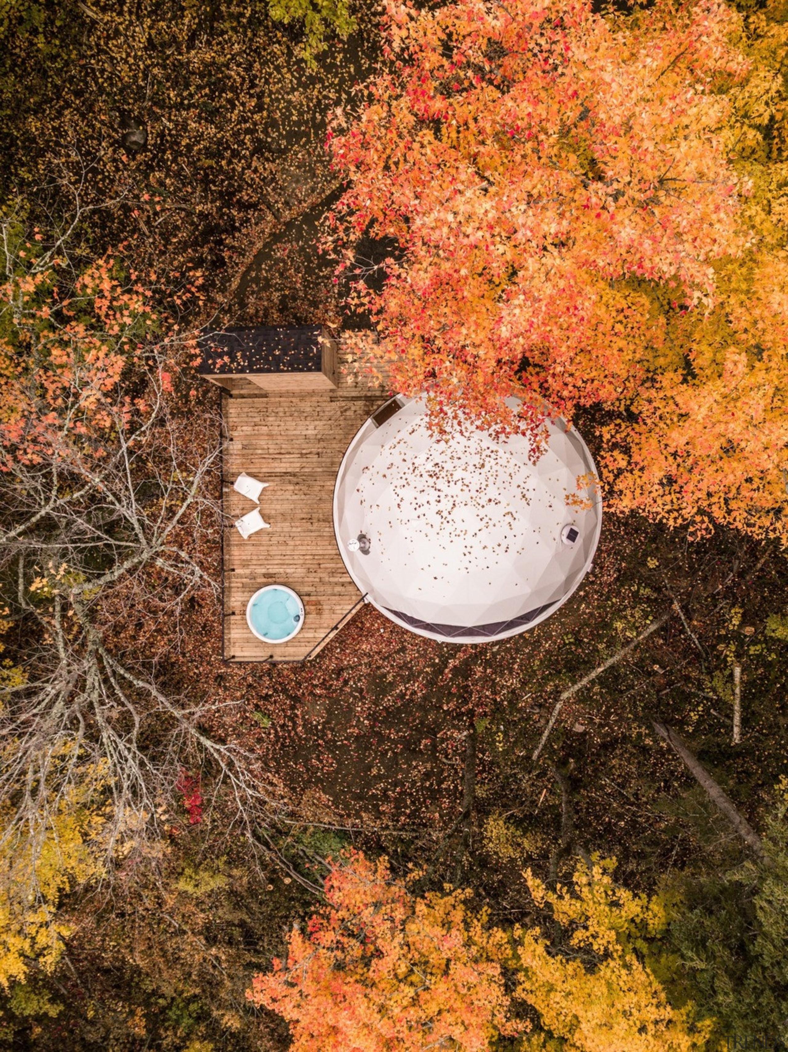 Dome 2 - autumn | branch | deciduous autumn, branch, deciduous, leaf, nature, plant, tree, brown, orange