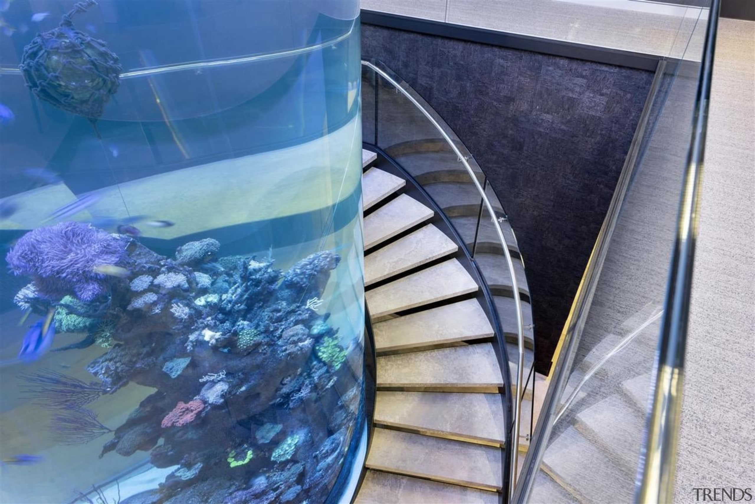 Zorzi Homes - marine biology | reef | marine biology, reef, water, blue, gray