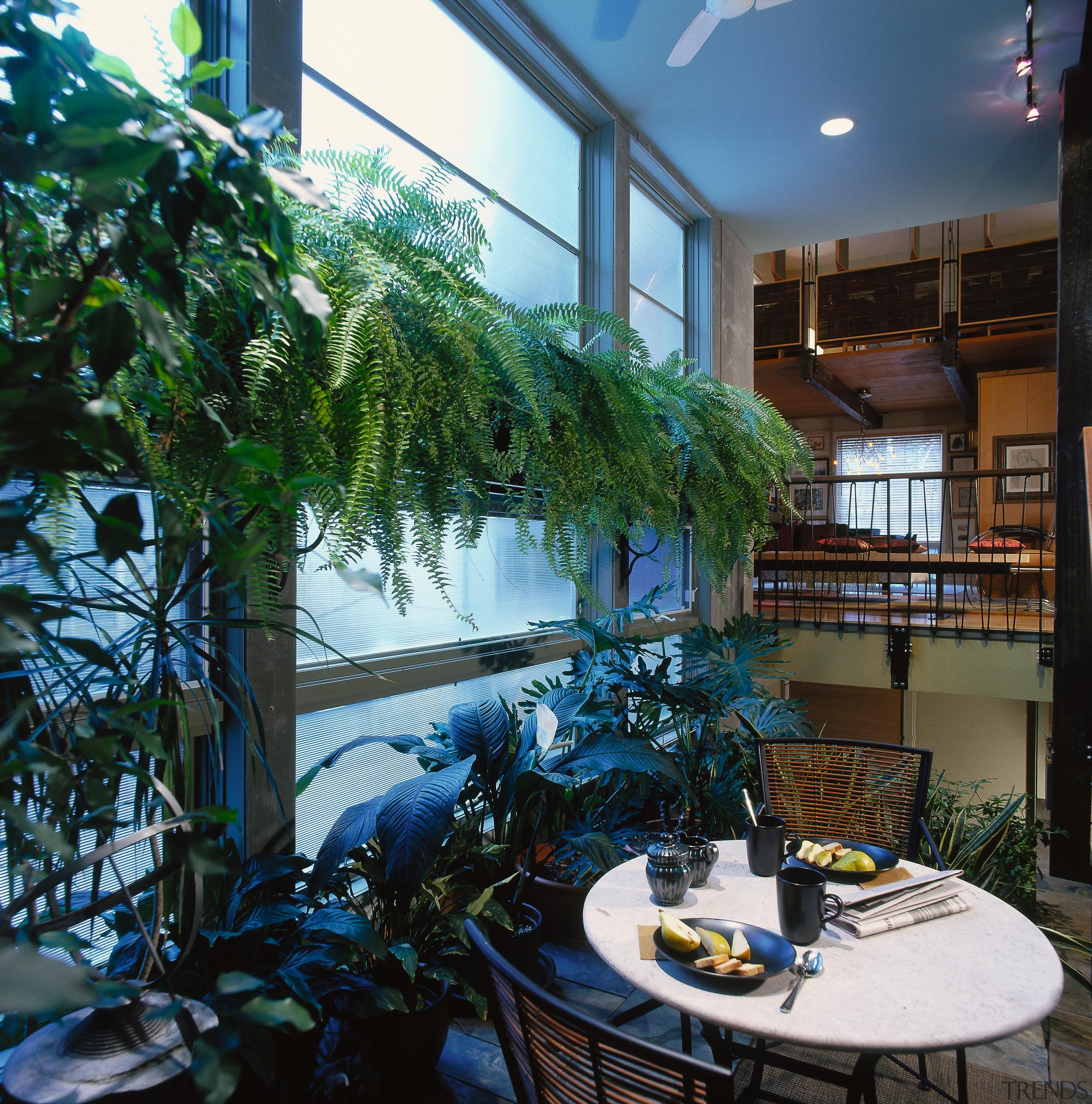 View of the indoor garden room, many palnts, home, interior design, plant, tree, window, black