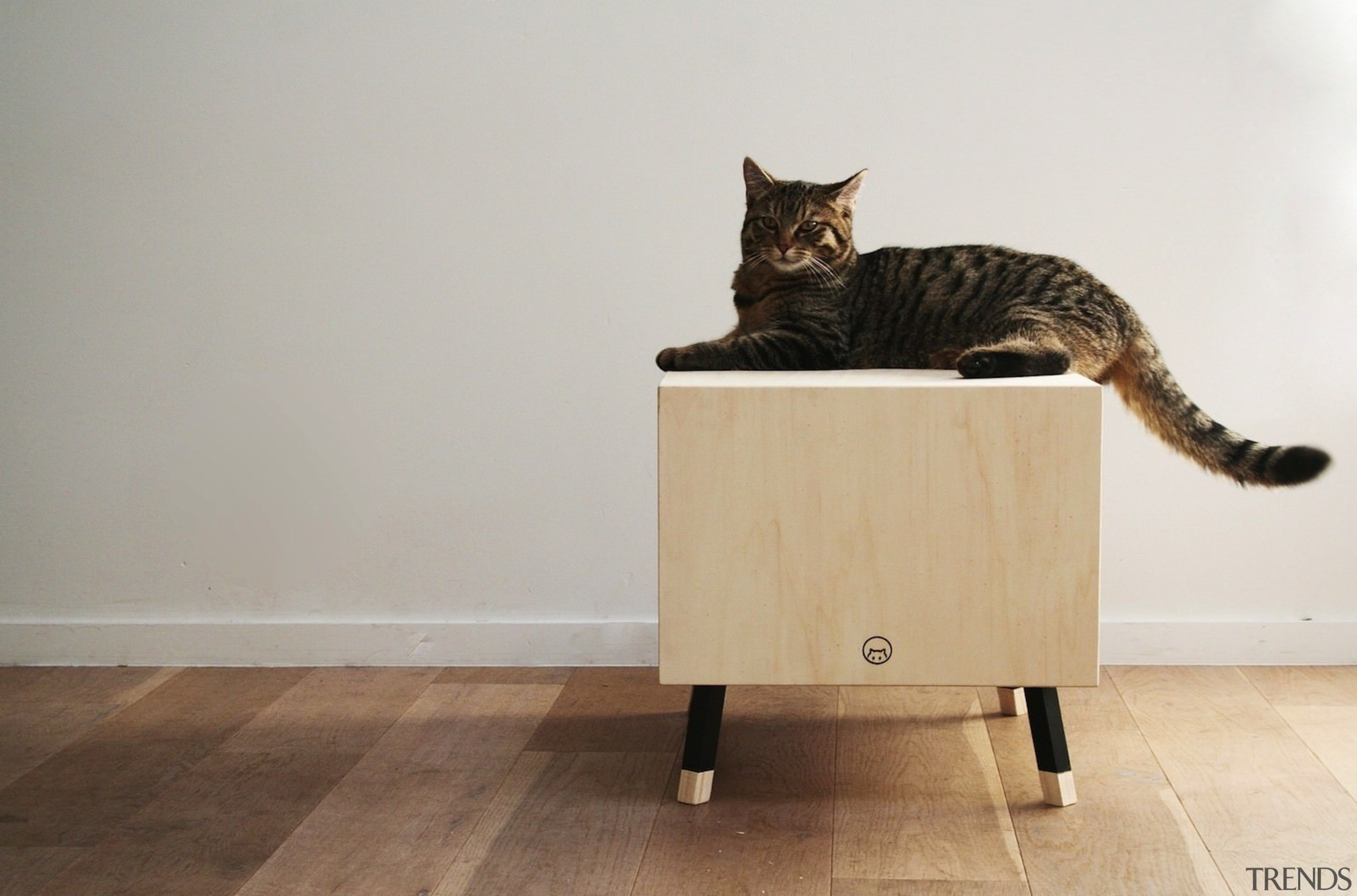 Designed by Krab - The table is small cat, cat like mammal, chair, floor, flooring, furniture, small to medium sized cats, table, whiskers, wood, gray