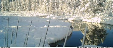 Webkamera på Vikerfjell