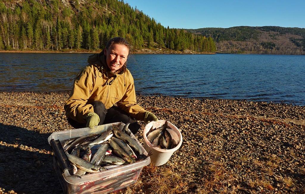 Fiske i Sperillen har lange tradisjoner og har vært en viktig mat ressurs i tidligere tider