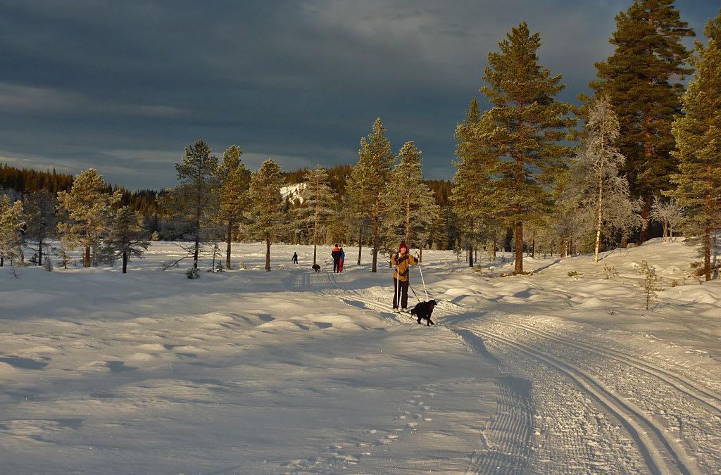 2014-12-30-Skitur-Vikerfjell-P1090756