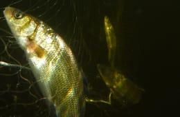 Garnfiske