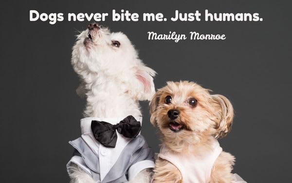 I cani non mi mordono mai. Solo gli umani (Marilyn Monroe)