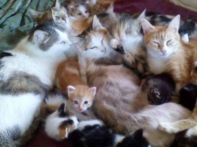 Torino, 42 gatti lasciati soli in casa alle Vallette: 2