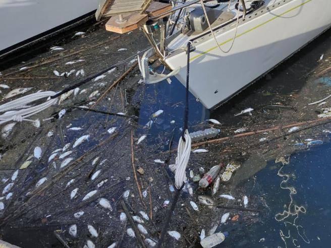 Roma, centinaia di pesci morti nel Tevere e sulla costa