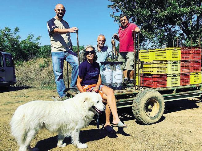 Cirinnà-Montino e i 24 mila euro nella cuccia del cane: