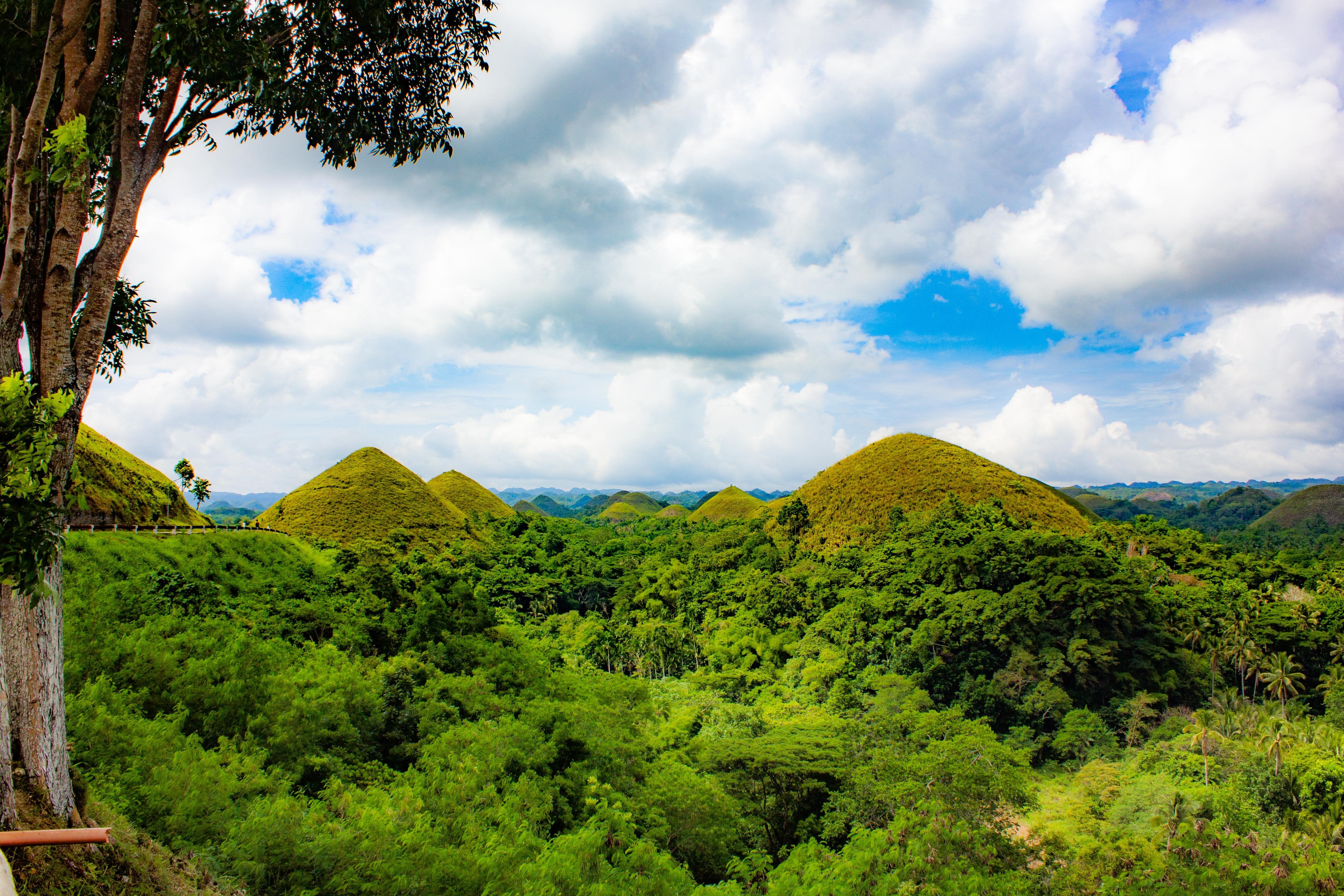 Bohol tree tops